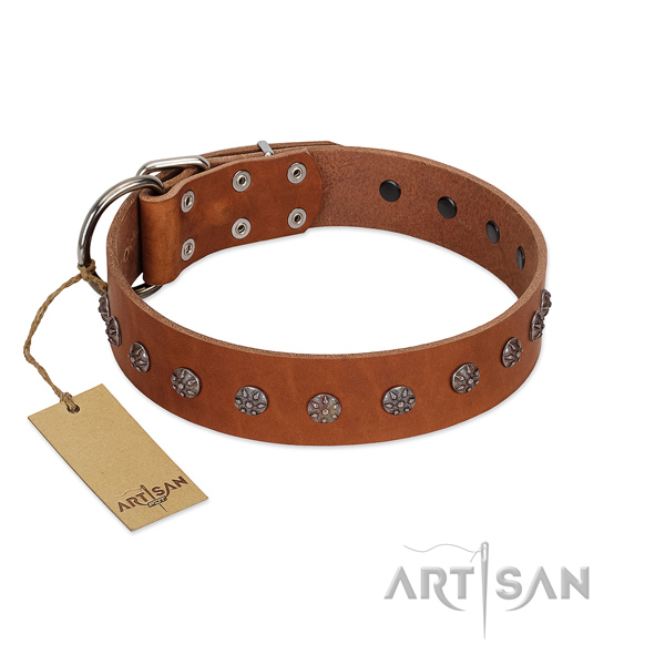 Handy use full grain leather dog collar with exquisite embellishments