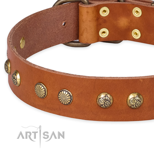 Genuine leather collar with rust resistant traditional buckle for your attractive four-legged friend