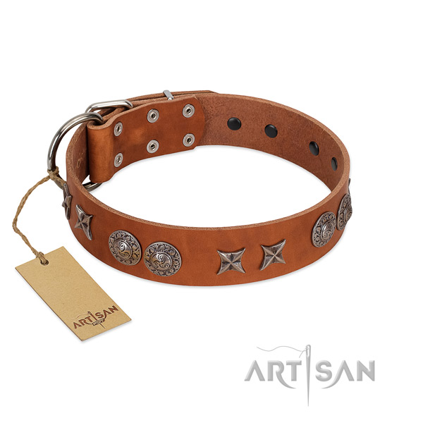 Leather collar with stylish studs for your four-legged friend