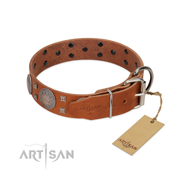 Fancy walking dog collar of natural leather with top notch studs