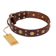 """Caprice of Fashion"" FDT Artisan Brown Leather English Pointer Collar with Round Decorations"