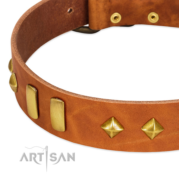 Everyday walking genuine leather dog collar with stylish design studs