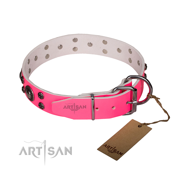 Everyday use embellished dog collar of high quality full grain natural leather