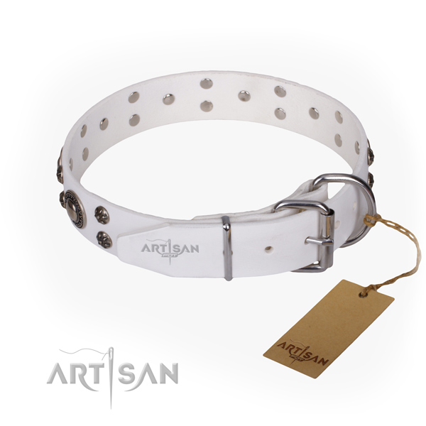 Everyday walking studded dog collar of reliable leather