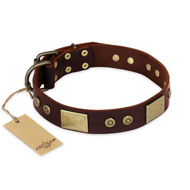 """Shining Armour"" FDT Artisan Brown Leather English Pointer Collar with Decorations"