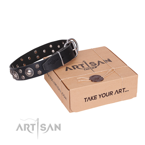 Walking dog collar of finest quality full grain natural leather with embellishments