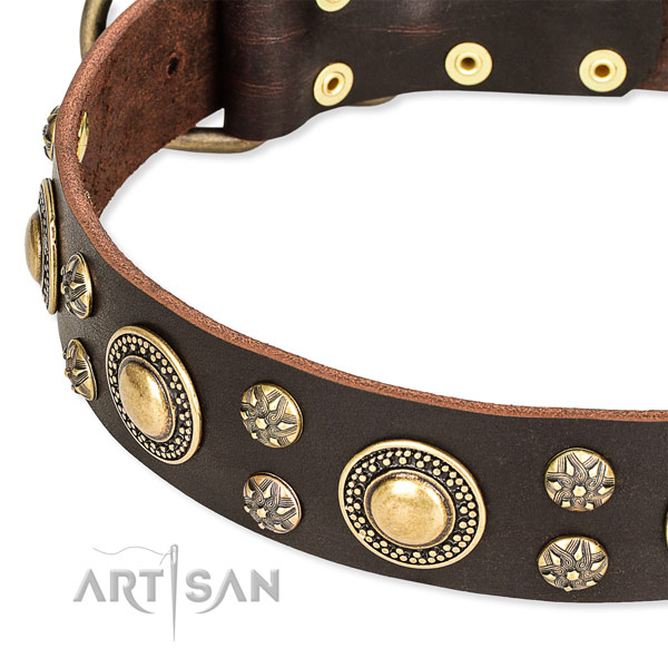 Everyday use embellished dog collar of top notch genuine leather