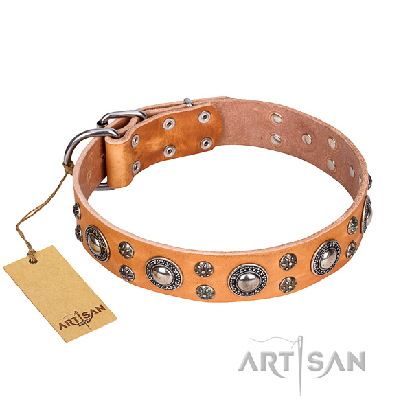 Daily walking dog collar of durable genuine leather with adornments