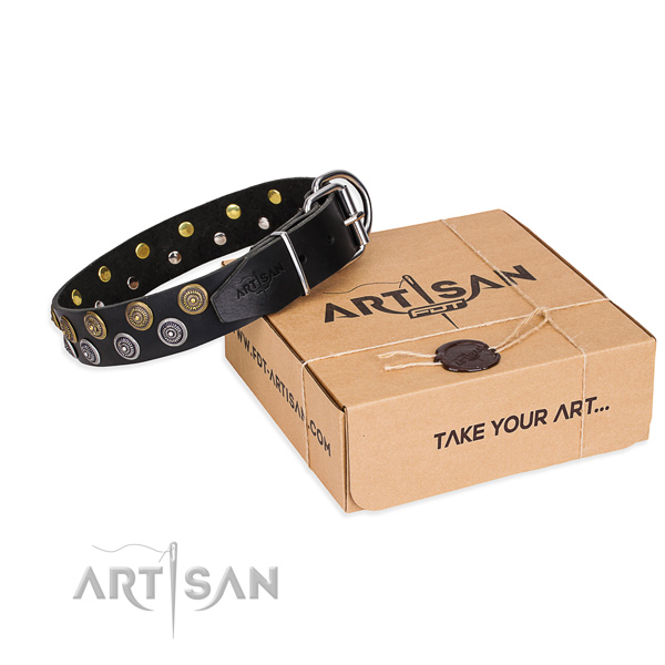 Fancy walking dog collar of reliable full grain genuine leather with embellishments