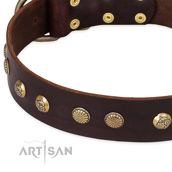 Leather collar with reliable fittings for your impressive four-legged friend