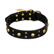 """Heavy Metal"" Leather English Pointer Collar with Skulls and Studs 1 1/2 inch (40 mm)"
