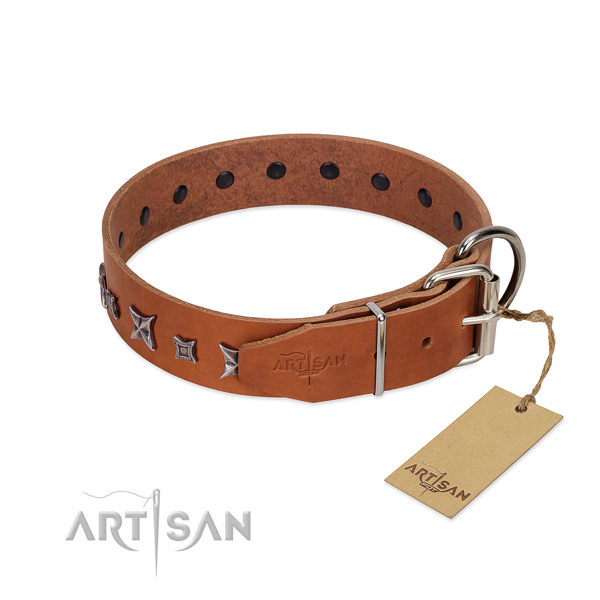 Natural leather dog collar with stylish adornments crafted four-legged friend