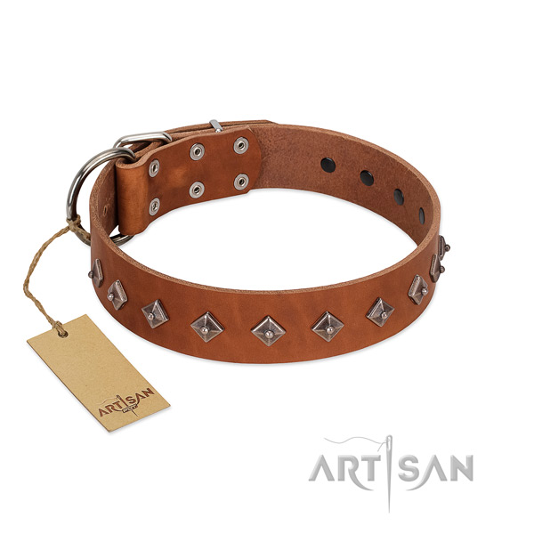 Genuine leather dog collar with exceptional studs created dog