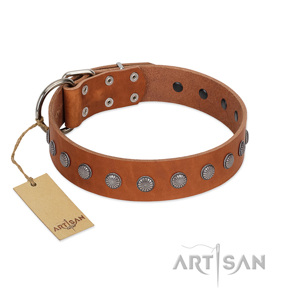 Fashionable embellishments on natural leather collar for daily use your dog