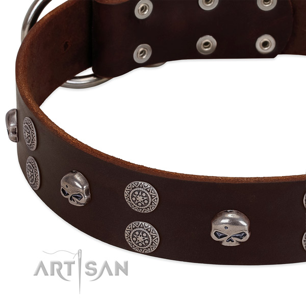 Quality natural leather dog collar with exceptional embellishments