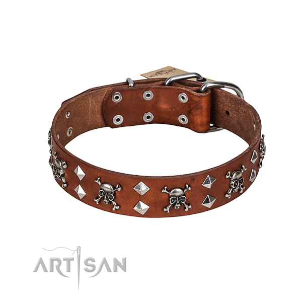 Everyday walking dog collar of durable full grain genuine leather with adornments