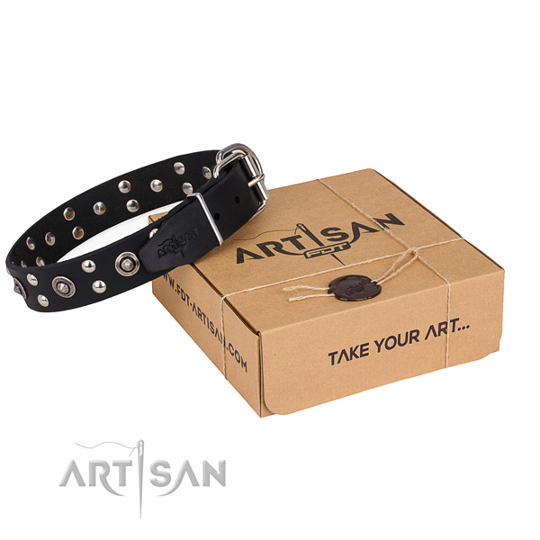 Everyday use dog collar with Inimitable rust-proof embellishments