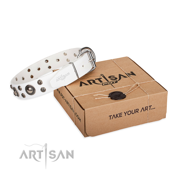 Fancy walking dog collar of durable leather with adornments