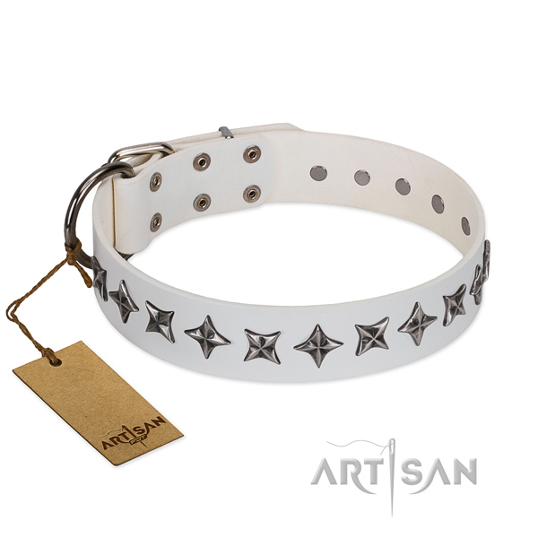Everyday use dog collar of quality genuine leather with adornments