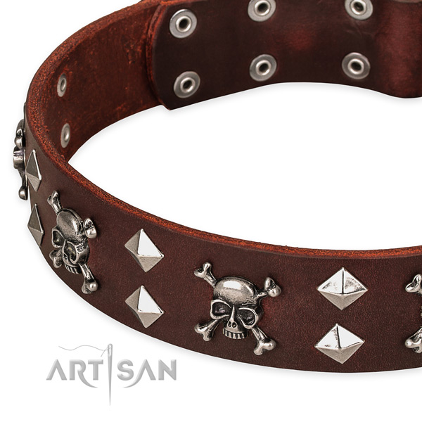 Daily walking adorned dog collar of quality full grain natural leather