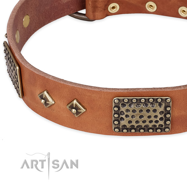 Rust-proof studs on leather dog collar for your four-legged friend