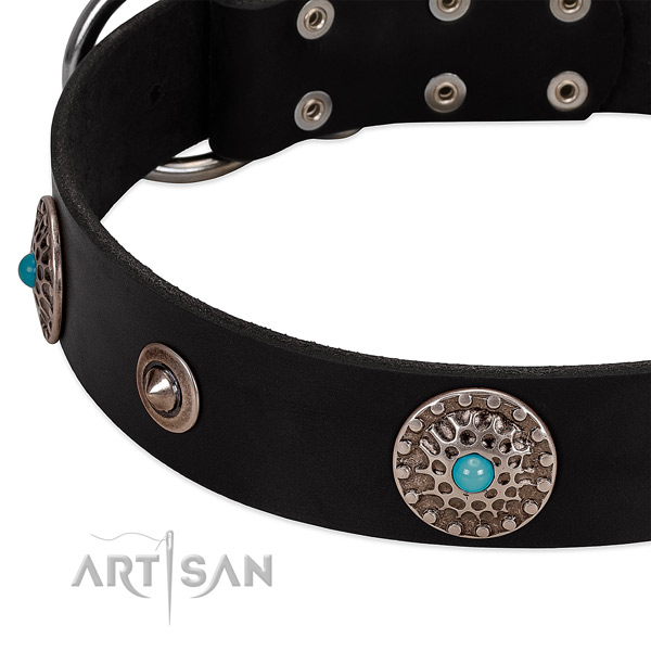 Studded collar of leather for your beautiful dog