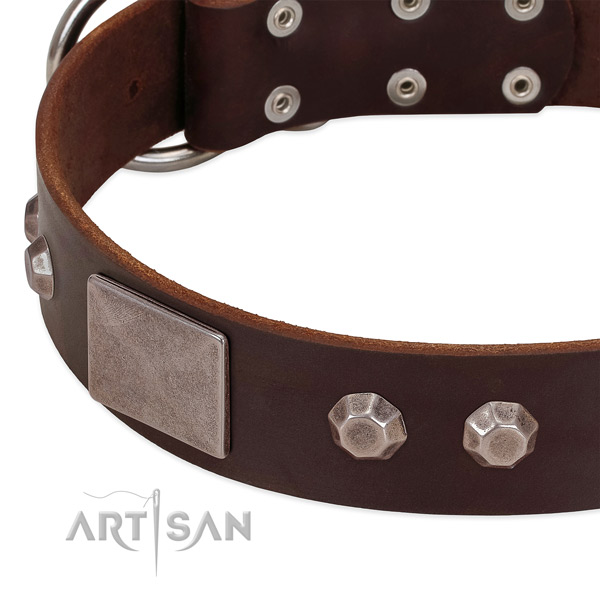 Fancy walking top rate full grain natural leather dog collar