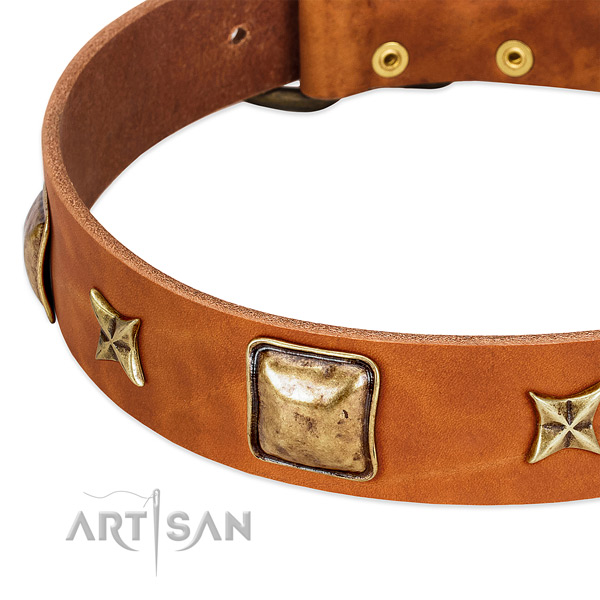 Rust-proof adornments on full grain leather dog collar for your pet