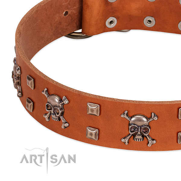 Stunning leather collar for your dog