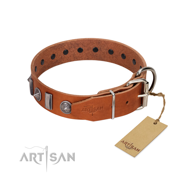 Everyday use leather dog collar with incredible embellishments