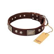 """Pirate Skull"" FDT Artisan Brown Leather English Pointer Collar with Old Silver Look Plates and Skulls"