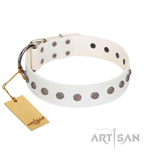 Fancy walking leather dog collar with unusual adornments