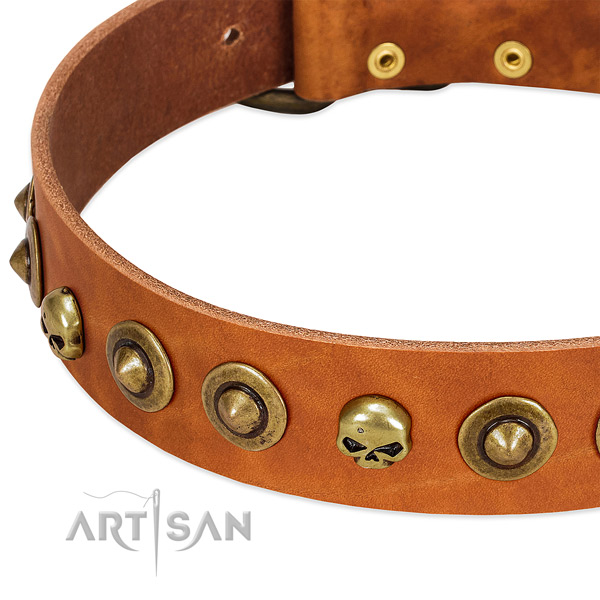 Remarkable studs on full grain natural leather collar for your dog