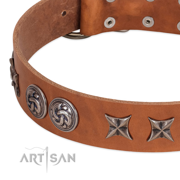 Leather collar with stylish design studs for your four-legged friend