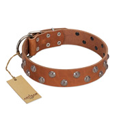 """Waltz of the Flowers"" Handmade FDT Artisan Tan Leather English Pointer Collar with Chrome-plated Engraved Studs"