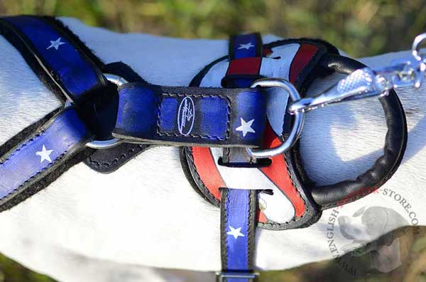 Back Plate of Painted Leather English Pointer Harness
