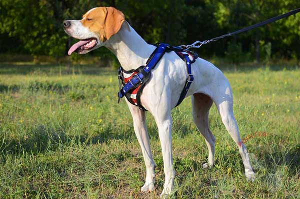 Painted Leather Dog Harness for English Pointer