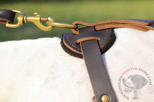 Leather English Pointer Harness Back Plate with Strong Brass Ring