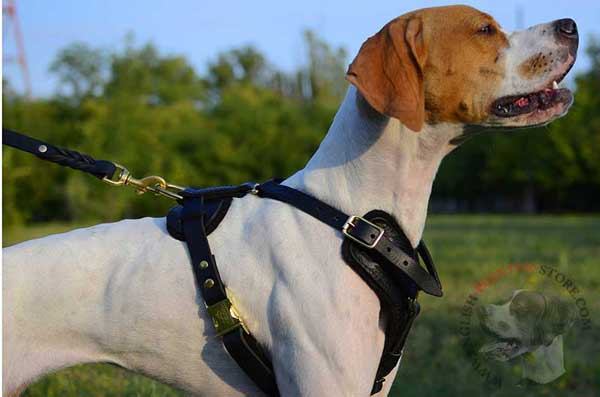 Adjustable Leather English Pointer Harness
