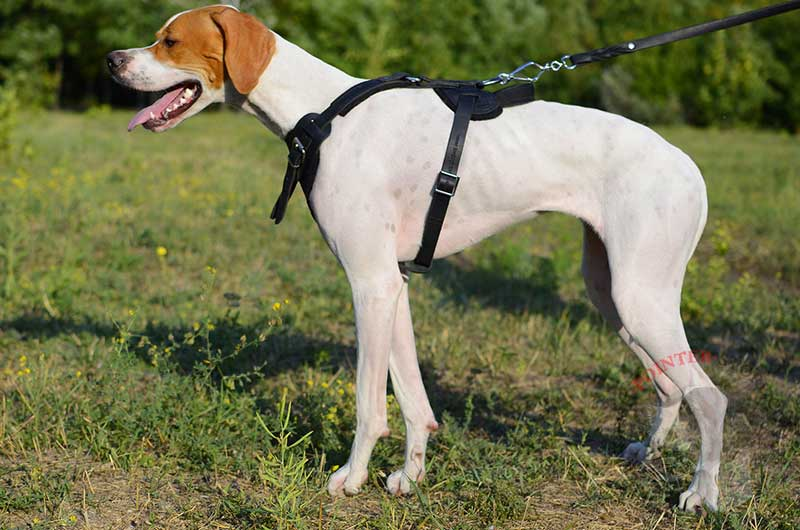 Protection Leather English Pointer Harness for Attack / Agitation Dog  Training