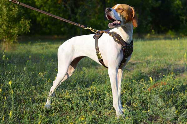 Handmade Leather English Pointer Harness with Studded Chest Plate