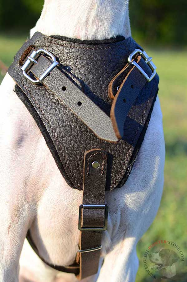 Protective Leather English Pointer Harness with Wide Padded Chest Plate
