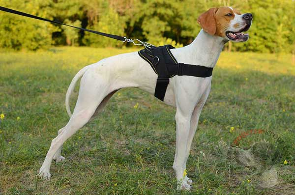 Multi-Purpose Nylon English Pointer Harness