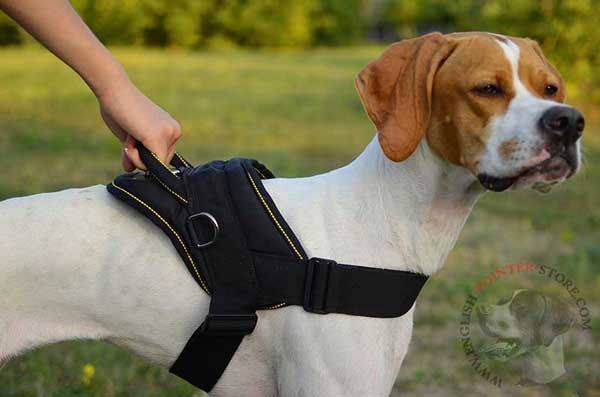 Multifunctional Nylon English Pointer Harness with Strong Handle