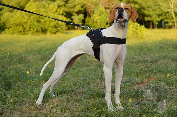 Walking Nylon English Pointer Harness