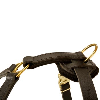 Corrosion Resistant D-ring of English Pointer Harness