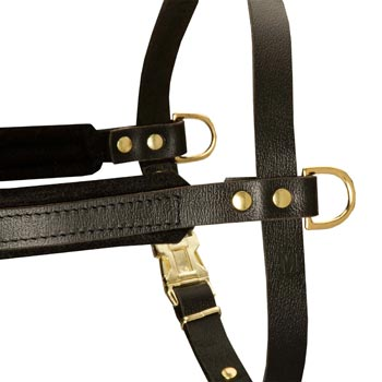 Training Pulling English Pointer Harness with Sewn-In Side D-Rings