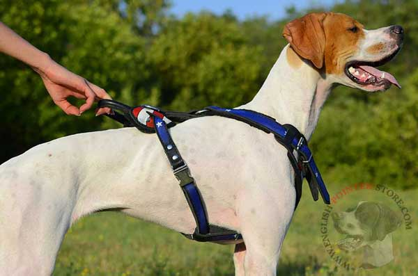 English Pointer Harness with quick Release Buckle