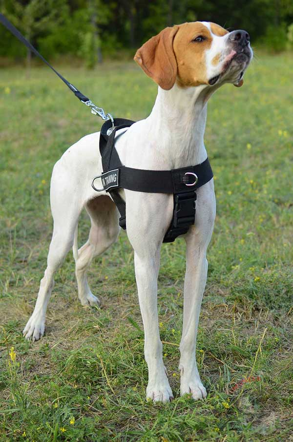 Adjustable Dog Harness for English Pointer