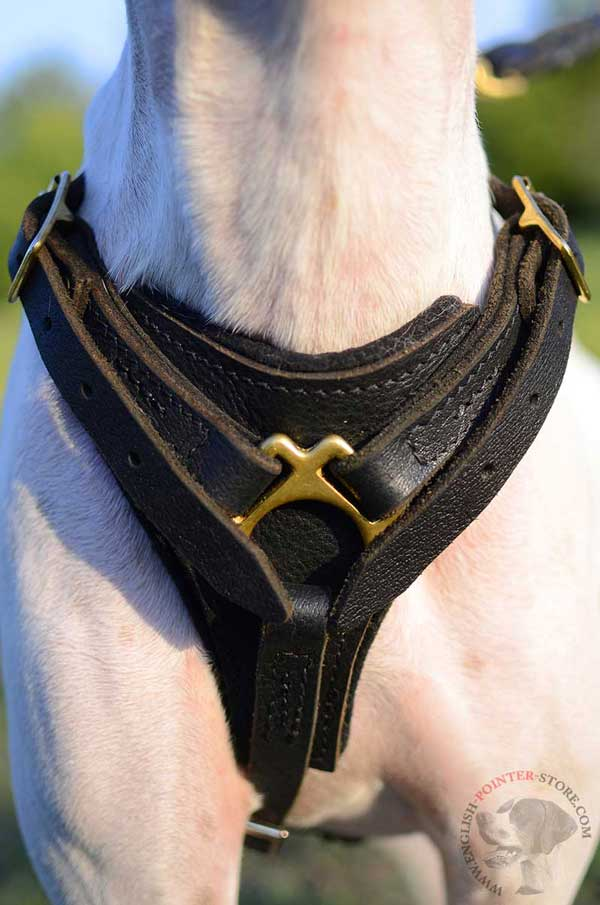 Leather English Pointer harness with soft felt padded chest plate